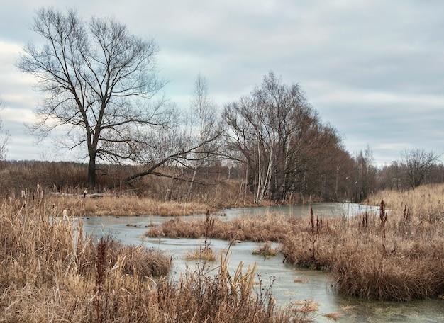 Paisagem do outono com grama murcha ao longo da margem do rio em um dia nublado