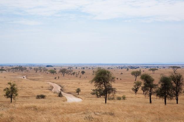 Paisagem do parque nacional do serengeti, tanzânia, áfrica