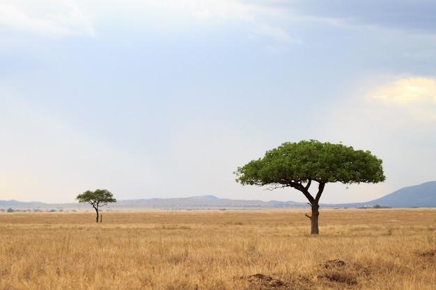 Paisagem do parque nacional do serengeti, tanzânia