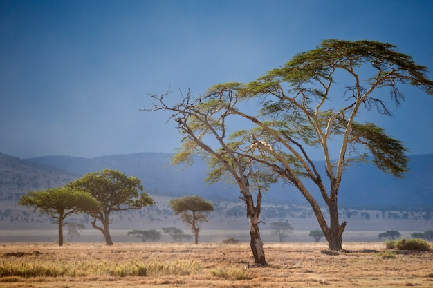 Paisagem do parque nacional serengeti, serengeti, tanzânia