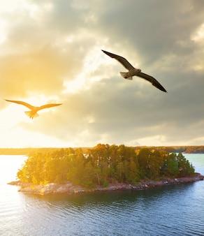 Paisagem do sol com ilhas arborizadas na suécia e gaivotas voadoras