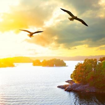 Paisagem do sol com pequenas ilhas no arquipélago de estocolmo e gaivotas voando. suécia