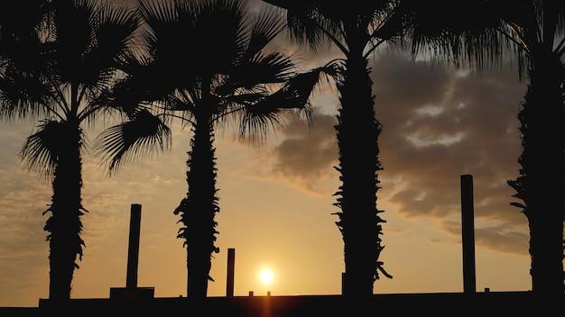 Paisagem do sol. pôr do sol na praia. silhueta de palmeiras na praia tropical do pôr do sol, verão