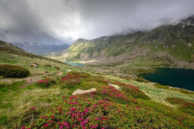 Paisagem do verde da montanha alta com as flores violetas no primeiro plano e nos lagos. dia com nuvens. andorra