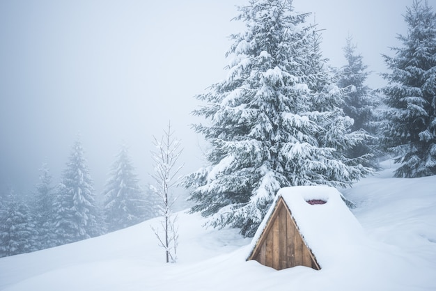 Paisagem dos cárpatos de inverno, árvores de natal na neve.