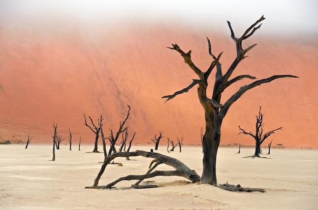 Paisagem dos mortos vlei, sossusvlei, deserto do namibe, namíbia, áfrica do sul