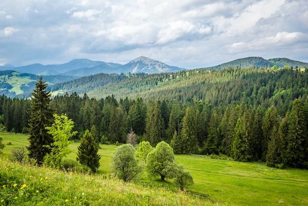 Paisagem encantadora do verão de prados verdes
