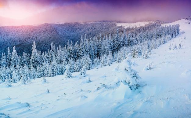 Paisagem ensolarada de inverno
