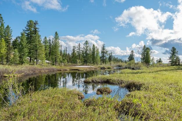 Paisagem ensolarada de verão com pântano, floresta e gramado