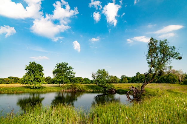 Paisagem ensolarada de verão com uma bela floresta