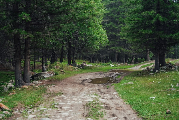 Paisagem escura da floresta atmosférica com poça na estrada de terra.