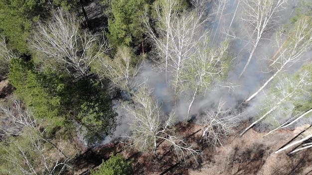 Paisagem escura da floresta queimada misteriosa. floresta coberta de cinzas após o incêndio. fumaça subindo do solo após o incêndio.