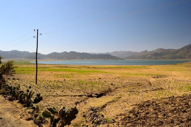 Paisagem etíope dourada, campos de teff e árvore