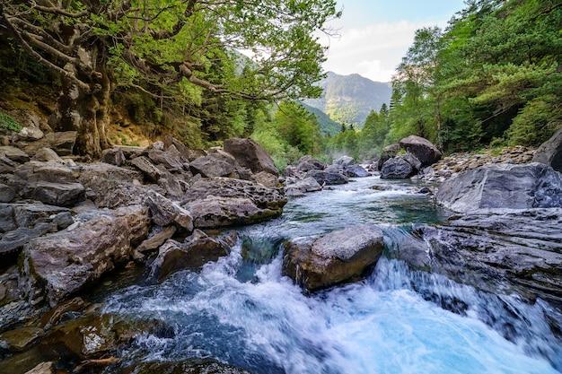 Paisagem florestal com rio rápido e limpo, árvores grandes e rochas. pirineus, ordesa. descanso e passeio pela natureza