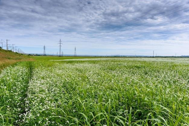 Paisagem fresca de uma linha de postes elétricos com cabos de eletricidade em um campo verde
