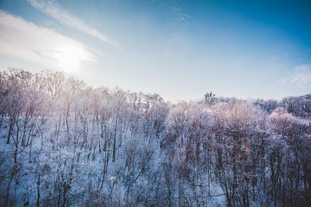 Paisagem gelada de inverno em uma floresta de neve ensolarada no cume das árvores em uma floresta coberta de neve e azul