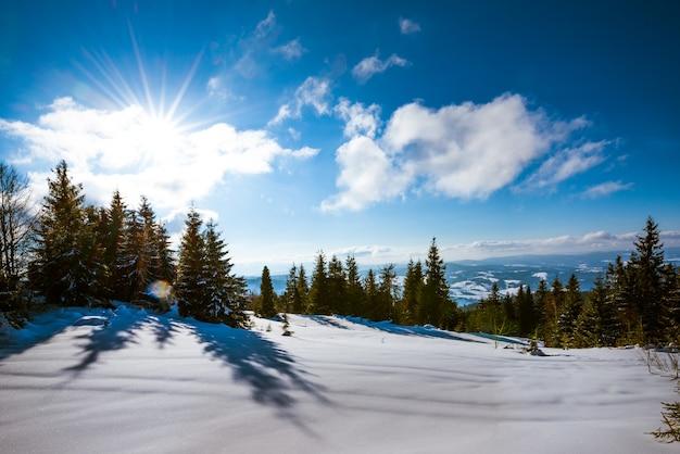 Paisagem hipnotizante de pinheiros altos e delgados crescendo em montes de neve em uma colina contra uma superfície de céu azul, nuvens brancas e sol forte
