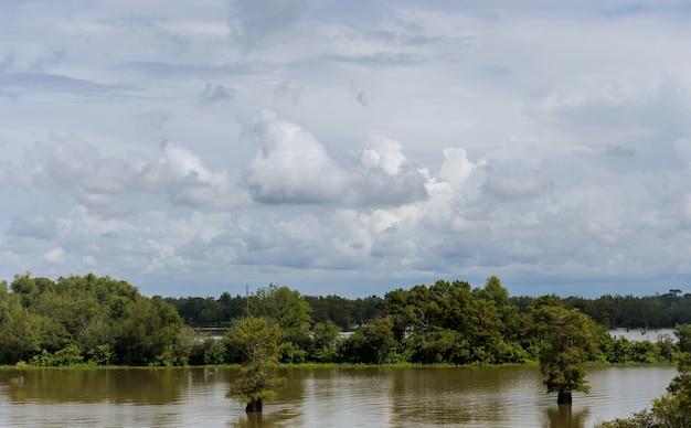 Paisagem horizontal com campo e árvores inundadas em um dia de verão
