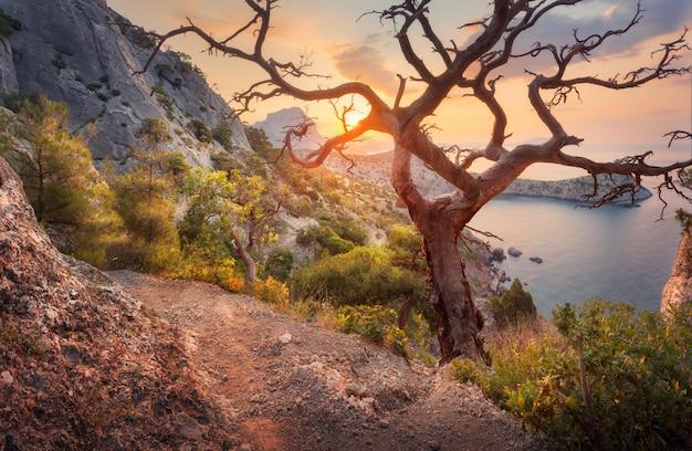 Paisagem linda de verão nas montanhas ao nascer do sol