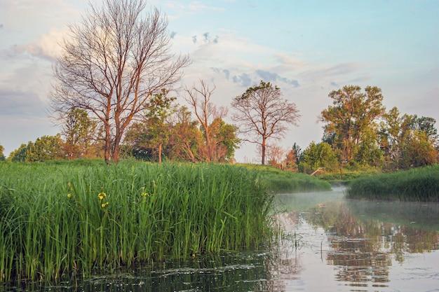 Paisagem matinal incrível com nevoeiro no rio e floresta ao redor, foco seletivo