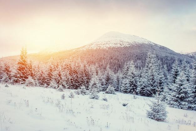 Paisagem misteriosa do inverno com nevoeiro, montanhas majestosas