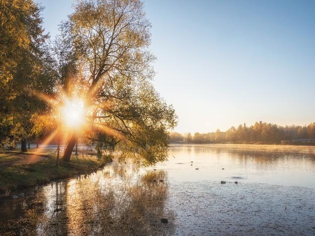 Paisagem mística da manhã ensolarada com névoa sobre o lago. foco suave.