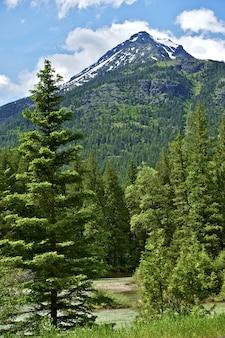 Paisagem montanha de verão