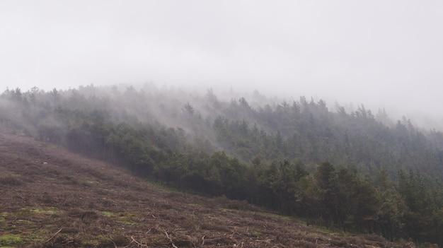 Paisagem montanhosa com pinheiros e nevoeiro