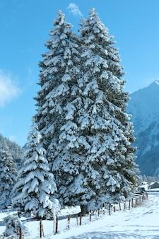 Paisagem montanhosa de inverno com abetos (arredores de heiterwang, áustria, tirol)