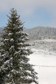 Paisagem montanhosa de inverno com grande abeto na vanguarda
