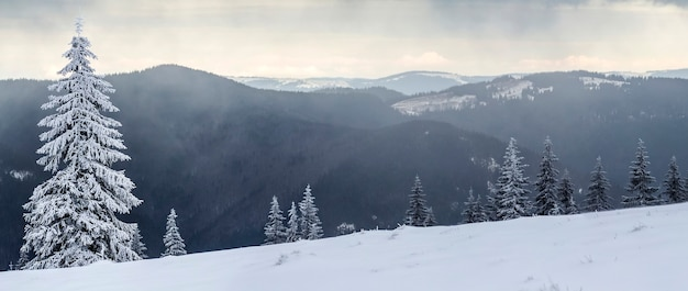 Paisagem montanhosa de inverno com pinheiros cobertos de neve