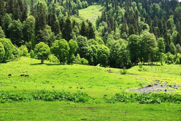 Paisagem montanhosa de verão montanhas do cáucaso avadhara república da abkhazia