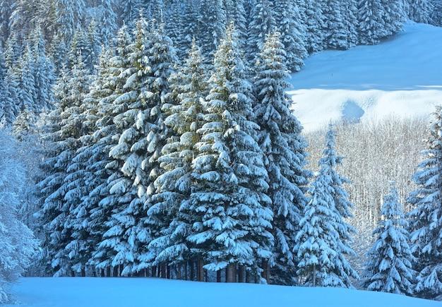 Paisagem montanhosa do inverno com floresta de abetos nevados na encosta (áustria, baviera).