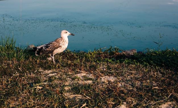 Paisagem natural com margem de água do rio e gaivota ambulante