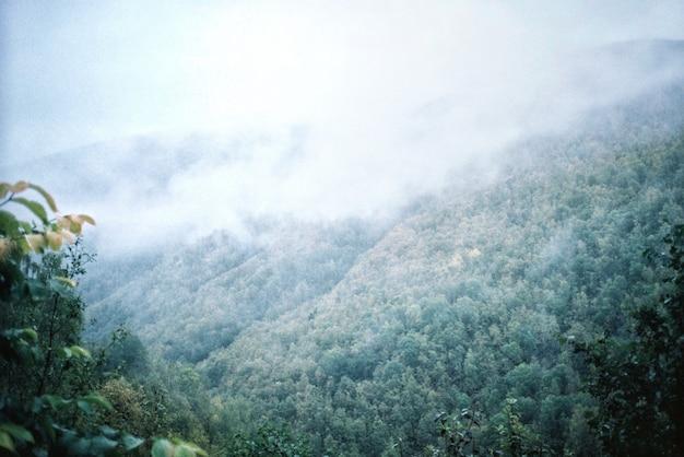 Paisagem natural das montanhas e da floresta