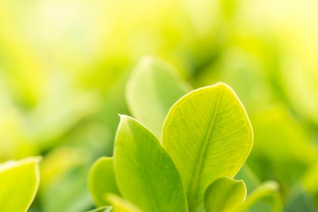 Paisagem natural das plantas para o fundo, papel de parede.