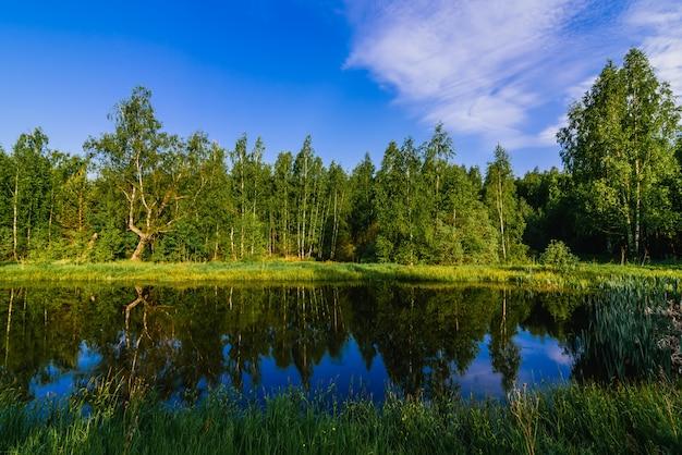 Paisagem natural de verão com rio na floresta e prado verde