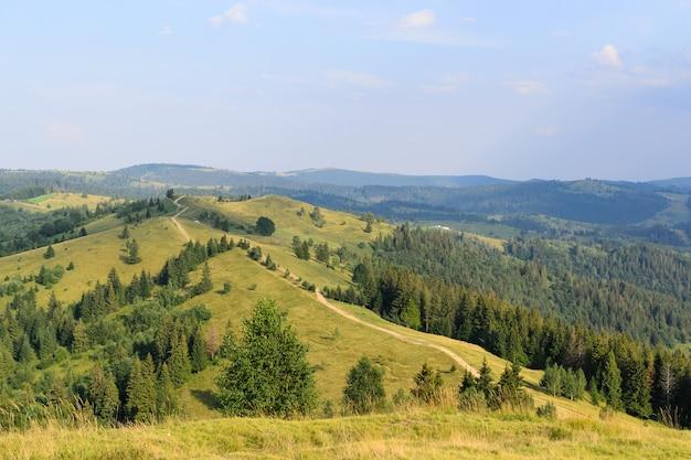 Paisagem natural maravilhosa. floresta e colinas gramíneas. natureza selvagem.
