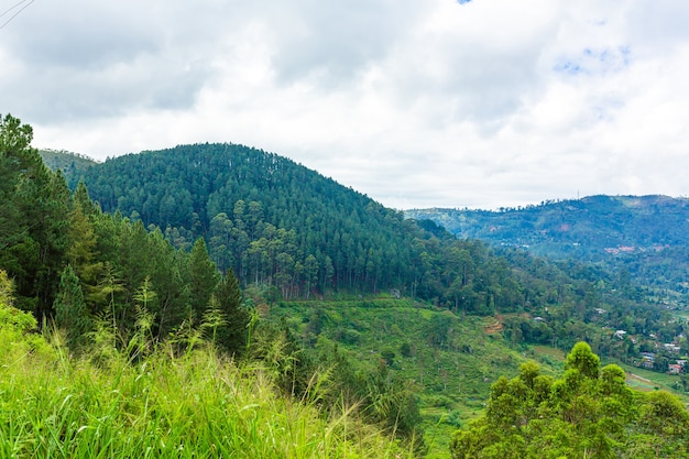 Paisagem natural maravilhosa. vale montanhoso verde.