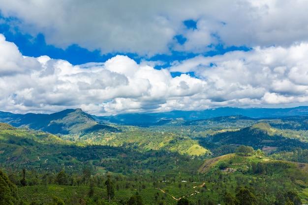 Paisagem natural pitoresca. plantações de chá verde nas terras altas. chá crescente.