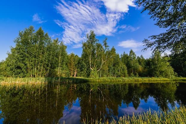 Paisagem natural verão com rio na floresta e prado verde