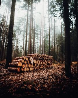Paisagem nebulosa de floresta com uma pilha de troncos