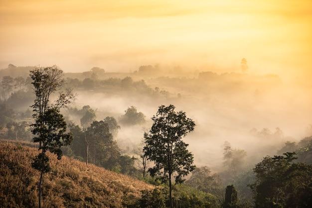 Paisagem nebulosa floresta pela manhã.