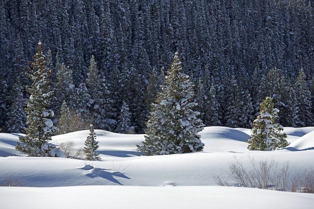Paisagem nevada paisagem