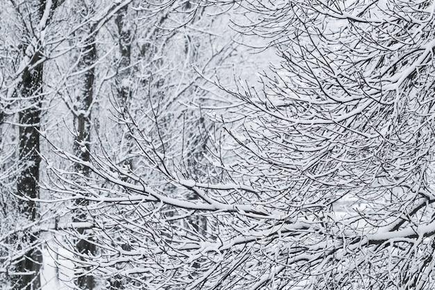 Paisagem nevando, conceito de férias de inverno - galhos de árvores fofas cobertas de neve de conto de fadas, cenário natural com neve branca e frio. queda de neve em winter park. foco suave