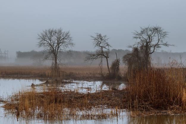 Paisagem nevoenta no greenwood, árvores hornbeam, outono chuvoso tempo, humor sombrio