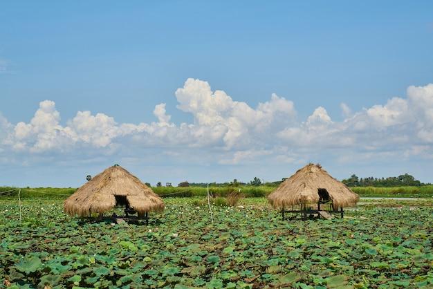 Paisagem no camboja