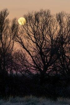 Paisagem noturna ao pôr do sol com a silhueta de árvores altas e uma grande lua cheia no céu dourado, solo congelado do frio do inverno. espanha.