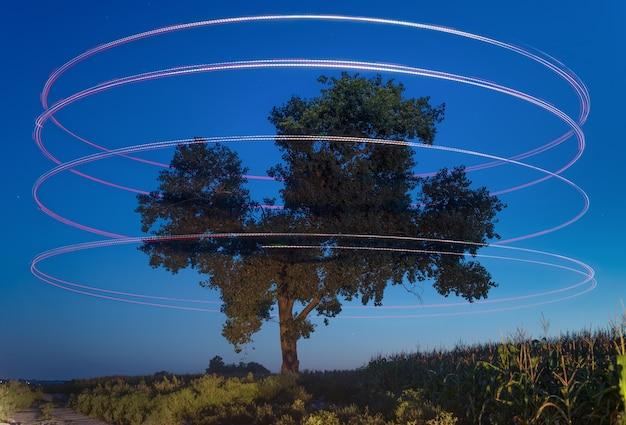 Paisagem noturna, grande árvore solitária em uma superfície de céu estrelado
