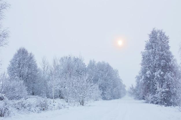 Paisagem nublada de neve e inverno com árvores
